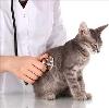 Ветеринарные клиники в Белой Калитве
